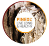 logo pineol mini 150